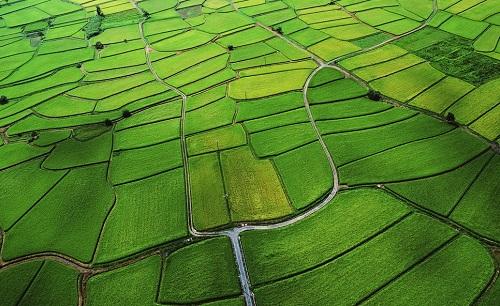 重庆建首个省部级创新平台 聚焦土壤污染控制修复