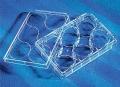美国Corning康宁3979,6孔板,Corning,Synthemax-R表面,无菌,独立包装